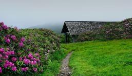 craggy-gardens