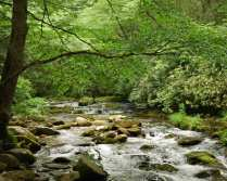 smoky-mountain-stream-copy1 Morningjoy weblog